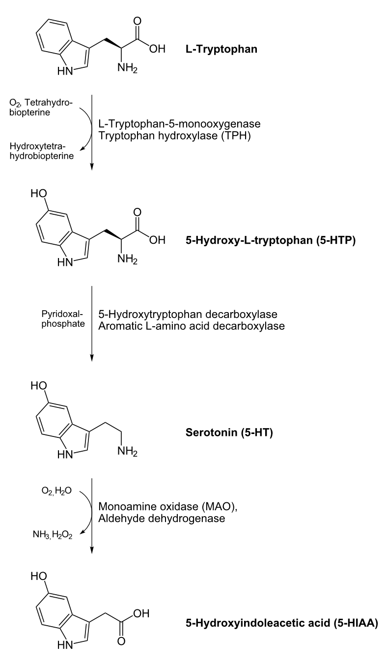 Serotonin_biosynthesis