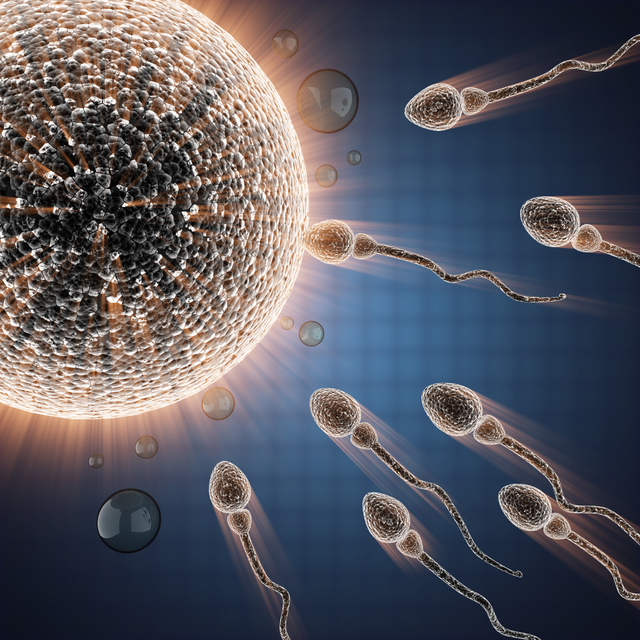 sperm and egg cell. microscopic image